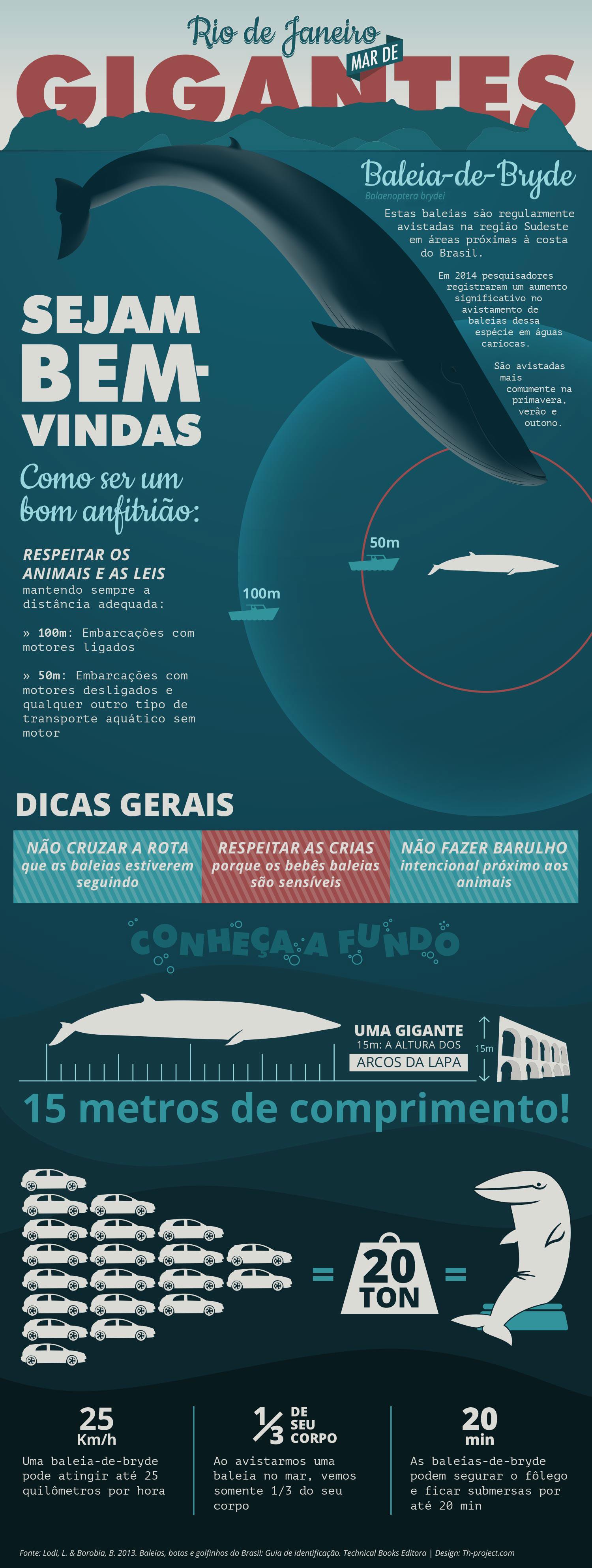 Infografico sobre as Baleias-de-Bryde
