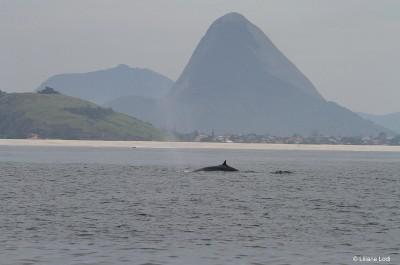 Dezembro de 2015. Praia de Itaipuaçú, Maricá, Rio de Janeiro